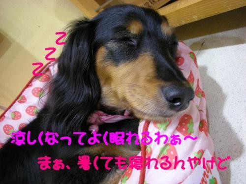 DSCN7488.jpg