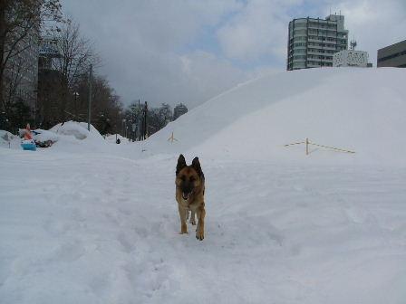 大通り公園。雪祭りの跡が。。