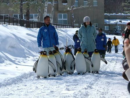 ペンギンの散歩1