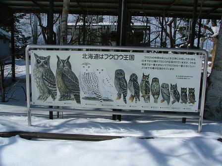 フクロウの看板