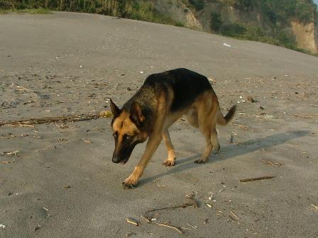 ボンの大好きな砂浜