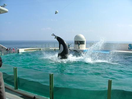 シャチのハイジャンプ