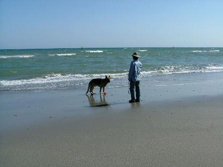 渥美の海です