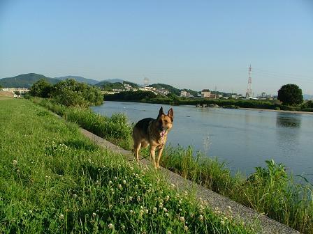初めての大和川です。