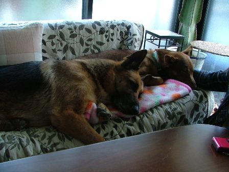 嫁の実家犬ビアンと一緒。