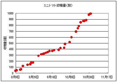 ミニトマト収穫量081103_4