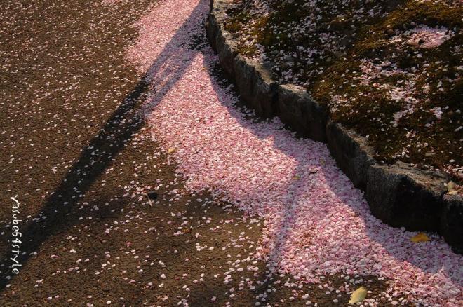 桜花散る1