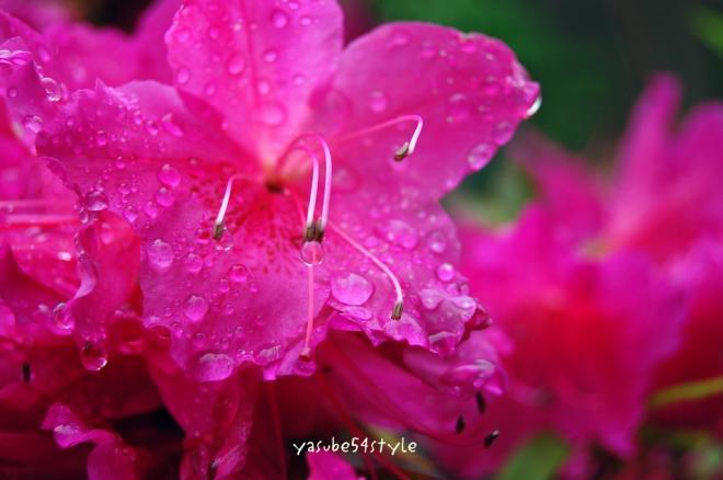 雨の日曜日2