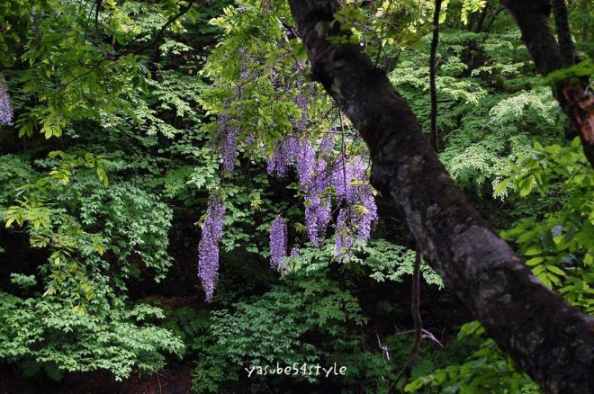 釜淵の滝07