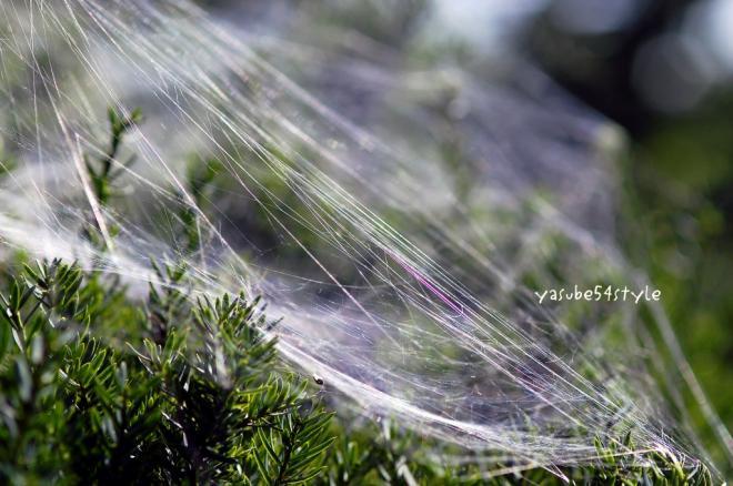 蜘蛛の糸1