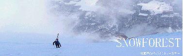 snowforest.jpg