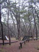 松原の遊具