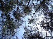 林から空を見る