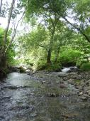0626t川の緑