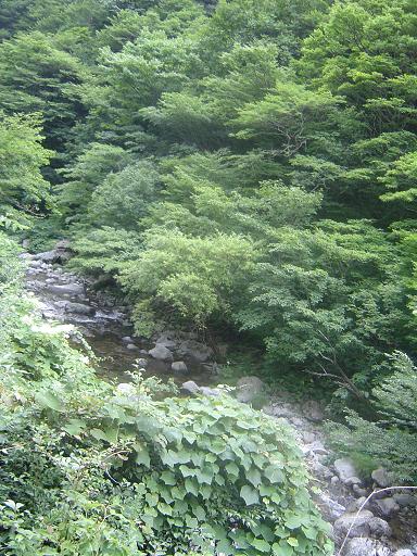 林道よりのぞむ渓