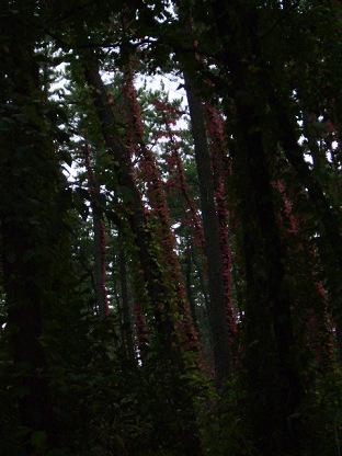 林の中の赤