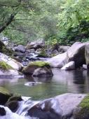 渇水でコケ石低い