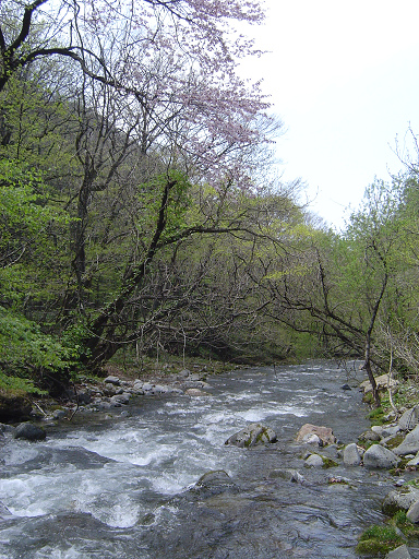 0420川の風景