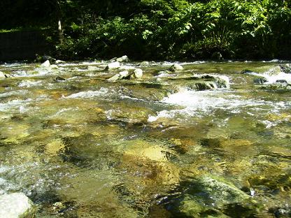 0805夏の川