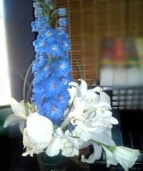 お花、綺麗♪