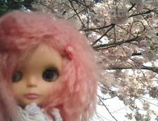 ボンバー苺♪