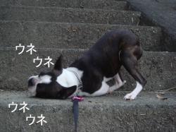 散歩へ-④