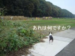 散歩へ-⑧