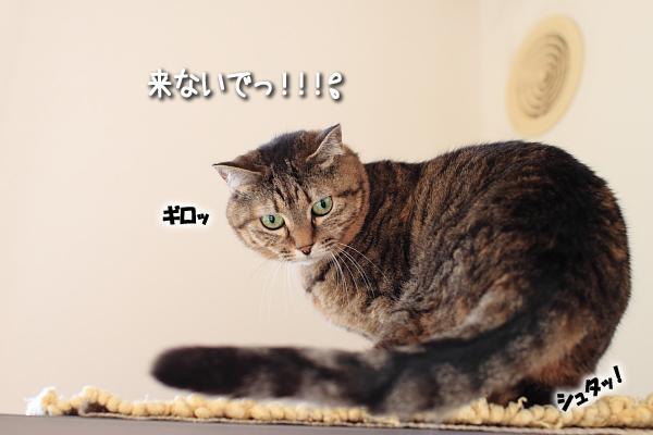 20100127-3.jpg