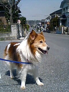 散歩は最高!