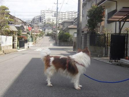 もう、散歩終わっちゃう。。。