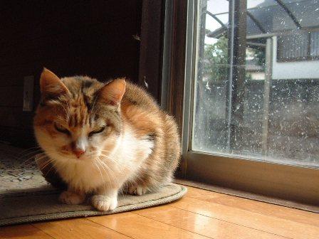 世界最強のネコ ミッケ!