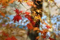 山中湖11月13日