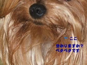 2007_1027画像0022