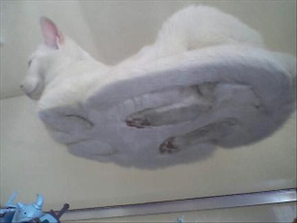 下からネコ