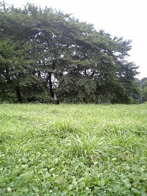 060716砧公園