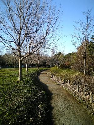 061229芦花公園2