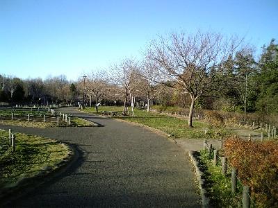 芦花公園3