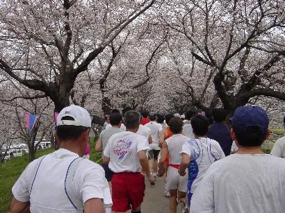 さくらマラソン3