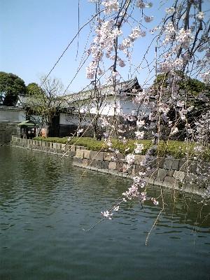 06皇居桜1
