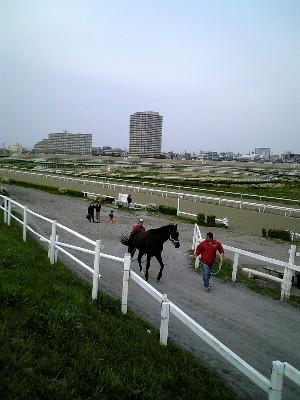06多摩川馬