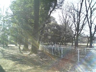 070212砧公園