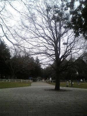 070217砧公園