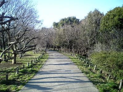 070311砧公園