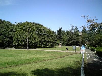 071007砧公園