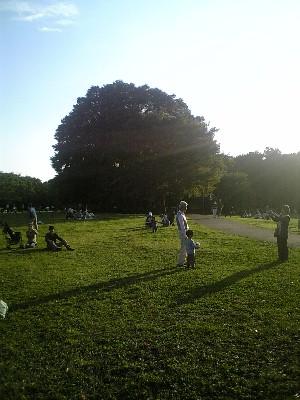 071021砧公園