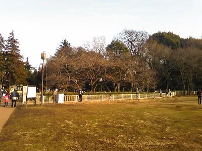 080211砧公園