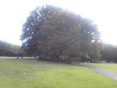 080920砧公園