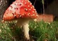 A Real Life Mario Mushroom