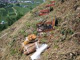 torii2007_0909_121912AA_160.jpg