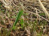 torii2007_0909_122100AA_160.jpg